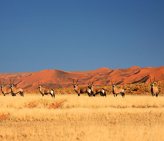 Family Friendly Accommodation In Namibia